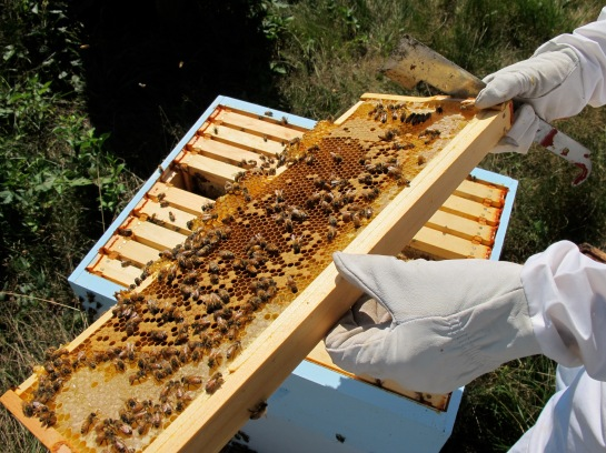 Last summer when I still had bees...