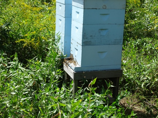 Entrance to bee hives in September 2015