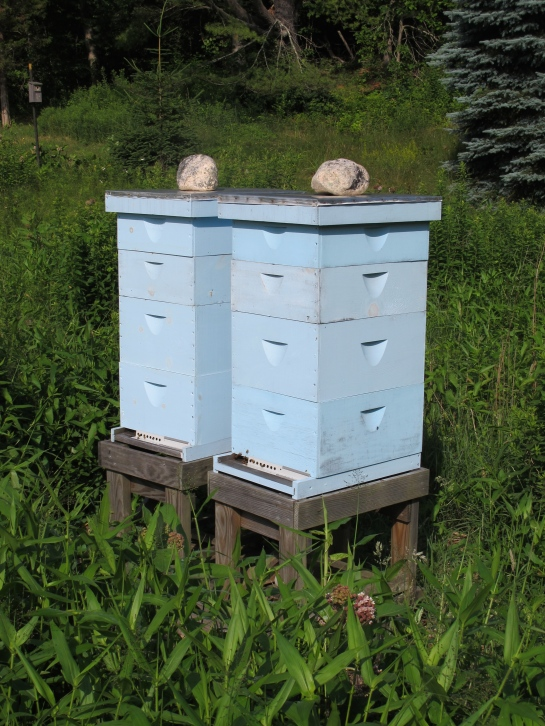 Hives in early July 2015