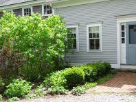 Lilacs in the dooryard